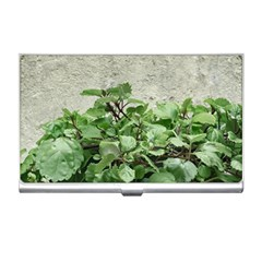 Plants Against Concrete Wall Background Business Card Holders