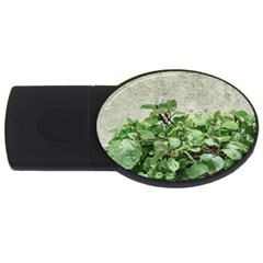 Plants Against Concrete Wall Background USB Flash Drive Oval (1 GB)