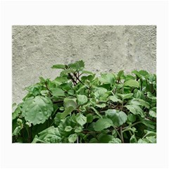 Plants Against Concrete Wall Background Small Glasses Cloth
