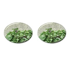 Plants Against Concrete Wall Background Cufflinks (Oval)