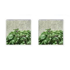 Plants Against Concrete Wall Background Cufflinks (Square)