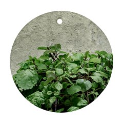 Plants Against Concrete Wall Background Round Ornament (Two Sides)