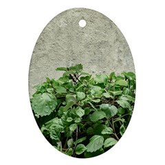 Plants Against Concrete Wall Background Oval Ornament (Two Sides)
