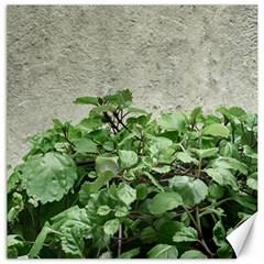 Plants Against Concrete Wall Background Canvas 12  x 12