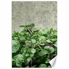 Plants Against Concrete Wall Background Canvas 12  x 18
