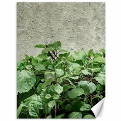 Plants Against Concrete Wall Background Canvas 36  x 48