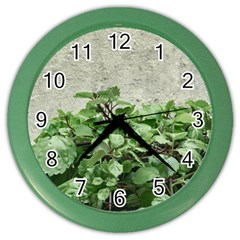Plants Against Concrete Wall Background Color Wall Clocks
