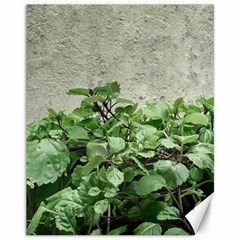 Plants Against Concrete Wall Background Canvas 11  x 14