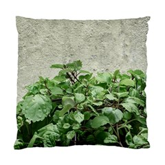 Plants Against Concrete Wall Background Standard Cushion Case (One Side)