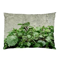 Plants Against Concrete Wall Background Pillow Case