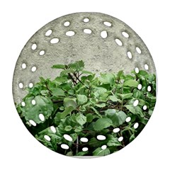 Plants Against Concrete Wall Background Ornament (Round Filigree)