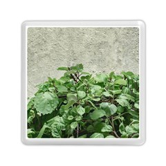 Plants Against Concrete Wall Background Memory Card Reader (Square)