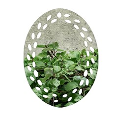 Plants Against Concrete Wall Background Oval Filigree Ornament (Two Sides)