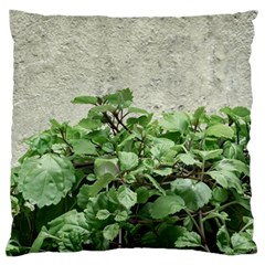 Plants Against Concrete Wall Background Large Cushion Case (Two Sides)