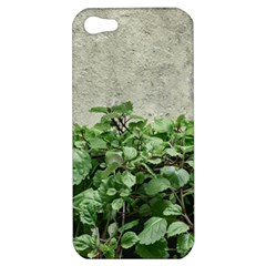 Plants Against Concrete Wall Background Apple iPhone 5 Hardshell Case