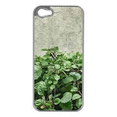 Plants Against Concrete Wall Background Apple iPhone 5 Case (Silver)