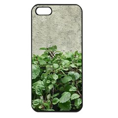 Plants Against Concrete Wall Background Apple iPhone 5 Seamless Case (Black)