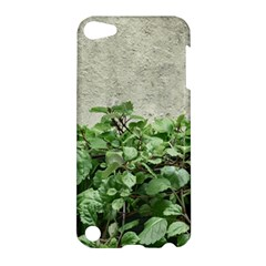 Plants Against Concrete Wall Background Apple iPod Touch 5 Hardshell Case