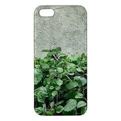 Plants Against Concrete Wall Background Apple iPhone 5 Premium Hardshell Case