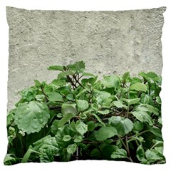 Plants Against Concrete Wall Background Large Flano Cushion Case (One Side)