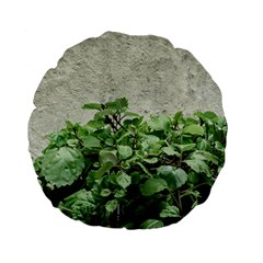 Plants Against Concrete Wall Background Standard 15  Premium Flano Round Cushions