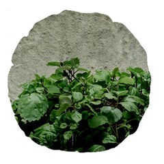 Plants Against Concrete Wall Background Large 18  Premium Flano Round Cushions