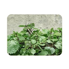 Plants Against Concrete Wall Background Double Sided Flano Blanket (Mini)