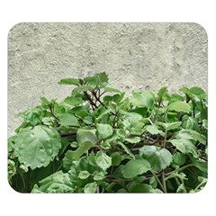 Plants Against Concrete Wall Background Double Sided Flano Blanket (Small)
