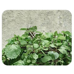 Plants Against Concrete Wall Background Double Sided Flano Blanket (Medium)
