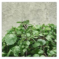 Plants Against Concrete Wall Background Large Satin Scarf (Square)