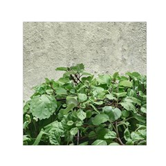 Plants Against Concrete Wall Background Small Satin Scarf (Square)