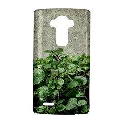 Plants Against Concrete Wall Background LG G4 Hardshell Case