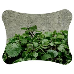 Plants Against Concrete Wall Background Jigsaw Puzzle Photo Stand (Bow)