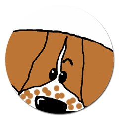 Peeping Brittany Spaniel Magnet 5  (Round)