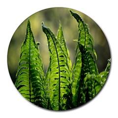 Fern Ferns Green Nature Foliage Round Mousepads
