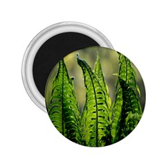 Fern Ferns Green Nature Foliage 2.25  Magnets