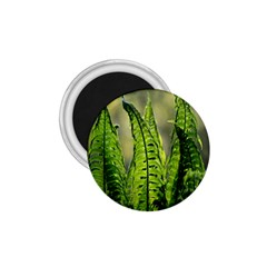 Fern Ferns Green Nature Foliage 1.75  Magnets