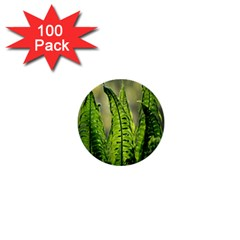 Fern Ferns Green Nature Foliage 1  Mini Buttons (100 Pack)