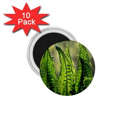 Fern Ferns Green Nature Foliage 1.75  Magnets (10 pack)