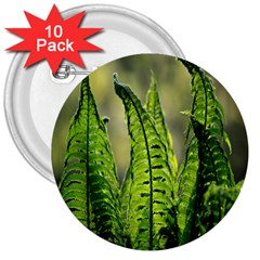 Fern Ferns Green Nature Foliage 3  Buttons (10 pack)