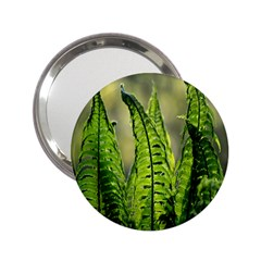 Fern Ferns Green Nature Foliage 2.25  Handbag Mirrors
