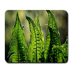 Fern Ferns Green Nature Foliage Large Mousepads