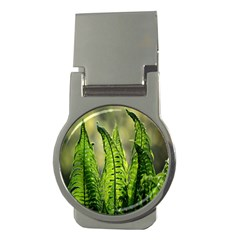 Fern Ferns Green Nature Foliage Money Clips (round)