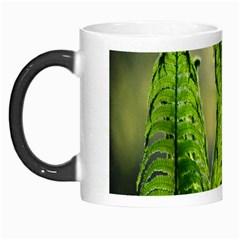 Fern Ferns Green Nature Foliage Morph Mugs