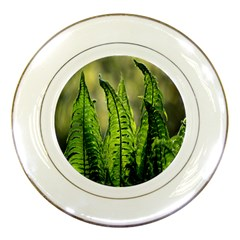 Fern Ferns Green Nature Foliage Porcelain Plates