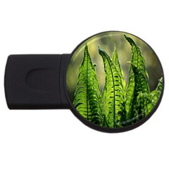 Fern Ferns Green Nature Foliage USB Flash Drive Round (4 GB)
