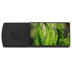 Fern Ferns Green Nature Foliage USB Flash Drive Rectangular (4 GB)