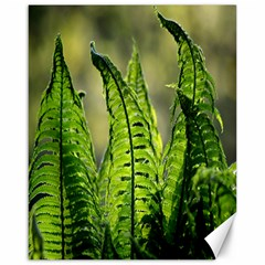 Fern Ferns Green Nature Foliage Canvas 16  x 20
