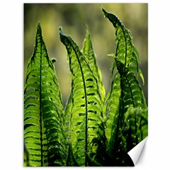 Fern Ferns Green Nature Foliage Canvas 36  x 48