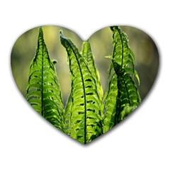 Fern Ferns Green Nature Foliage Heart Mousepads